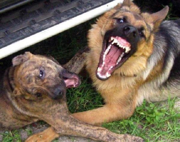 Скандальний розплідник собак далі порушує закон